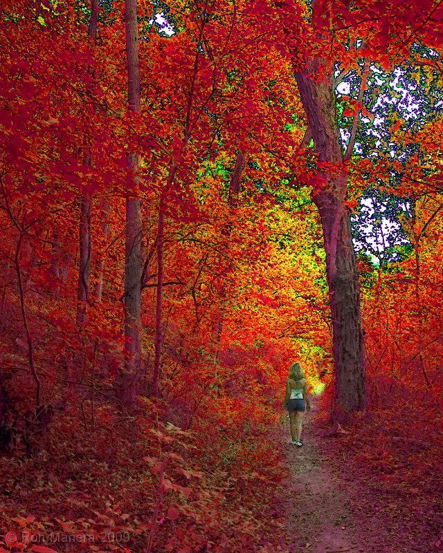 5 ideas for enhancing an autumn walk.